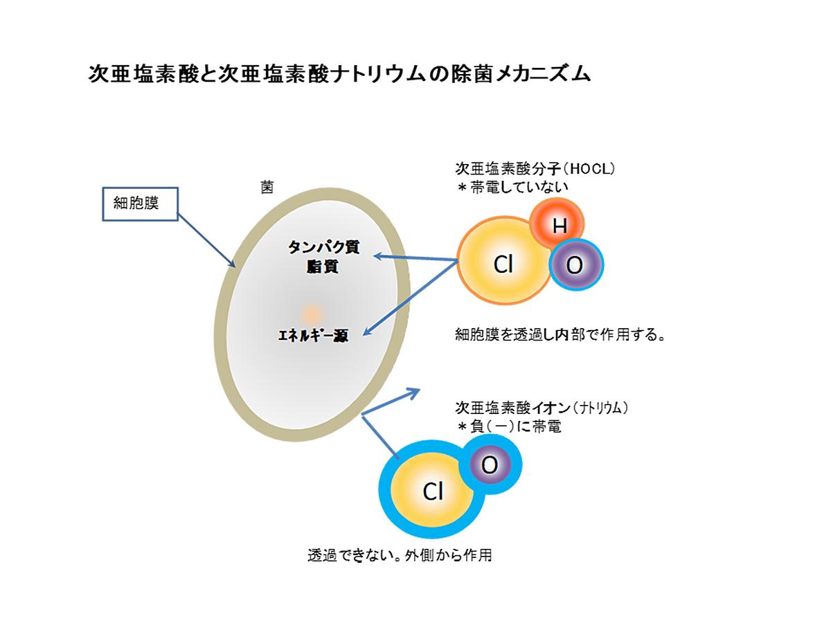 次亜塩素酸によるの除菌のメカニズム