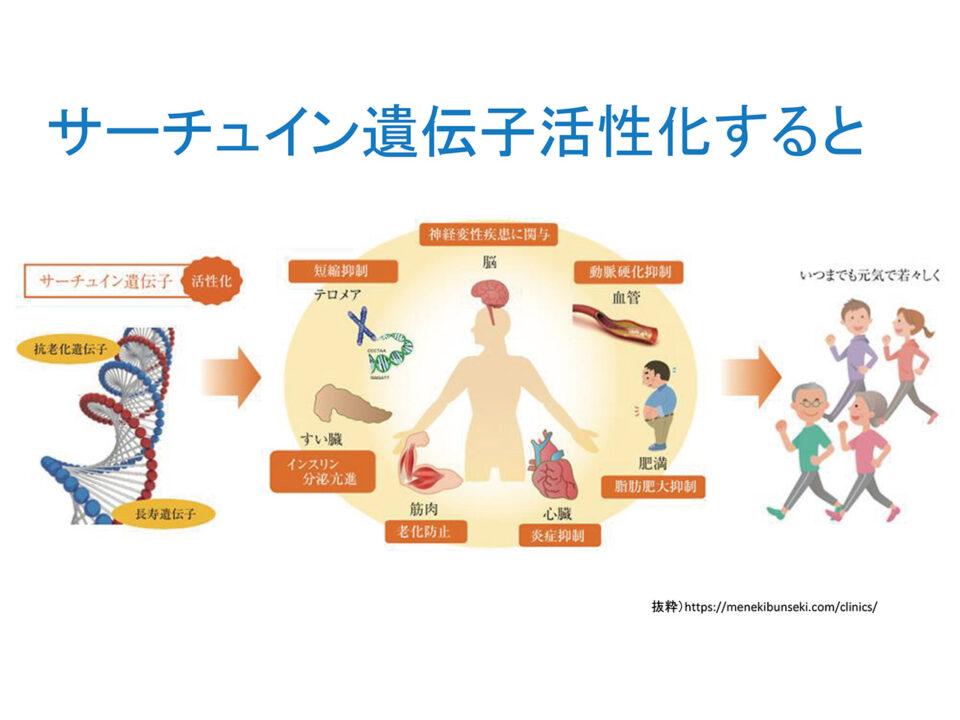 NMNによるサーチュイン遺伝子の活性化